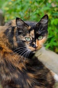 Tortuga bruja gato con ojos amarillos