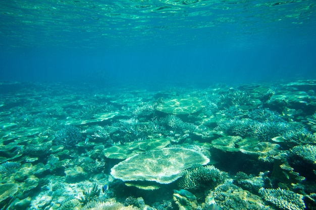 Una tortuga sentada en corales bajo la superficie del agua.