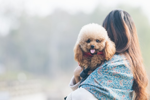 Toy poodle jugando con su maestro femenino