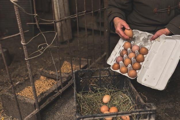 Trabajador de cultivos poniendo huevos en el estante