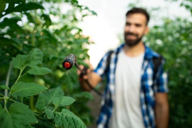 Trabajador joven agricultor barbudo rociando plantas con pesticidas para protegerse contra enfermedades