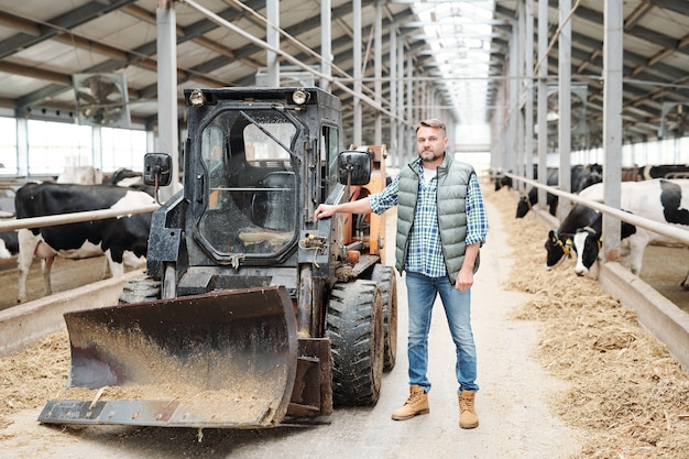 Trabajador seguro maduro de granja moderna de pie por tractor u otro equipo de trabajo en el largo pasillo entre dos filas de vacas lecheras