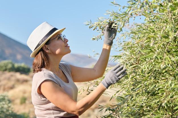 Trabajadora inspeccionando olivos en las montañas