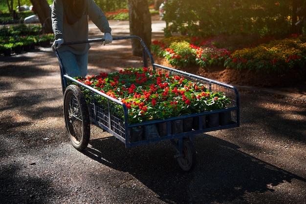 Trabajadores trabajando en el jardín de flores.