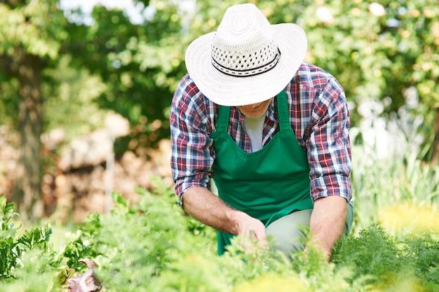 Trabajo duro del hombre en el jardín