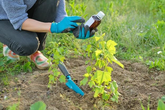 Trabajo de primavera en el jardín, botella de fertilizante químico, fungicida en mano de jardinera