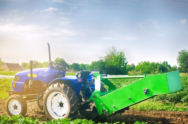 Tractor en el campo con un arado para excavar la cosecha de papas, trabajo de temporada, verduras frescas