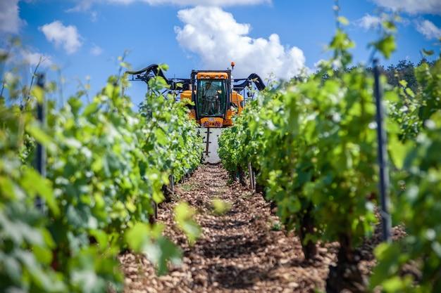 El tractor naranja cultiva el campo, rocía viñedos con fungicida, rocía pesticidas entre las filas de viñedos.