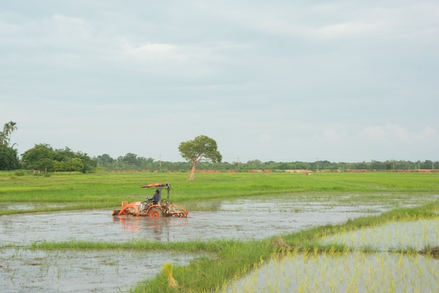 Tractor trabajando ara un campo en la granja para plantar