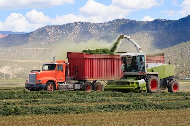 Los tractores agrícolas cosechan ensilaje de heno para la granja lechera