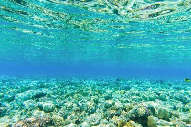 Tranquilo bajo el agua