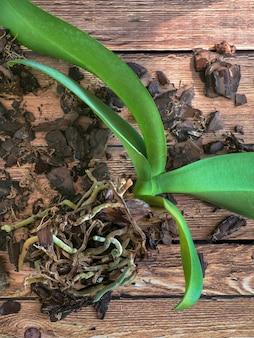 Trasplante de plantas. transplante de orquídeas. jardinería doméstica, cría de orquídeas.