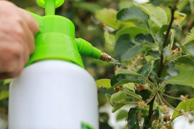 Tratamiento de plantas de insectos dañinos en la granja.
