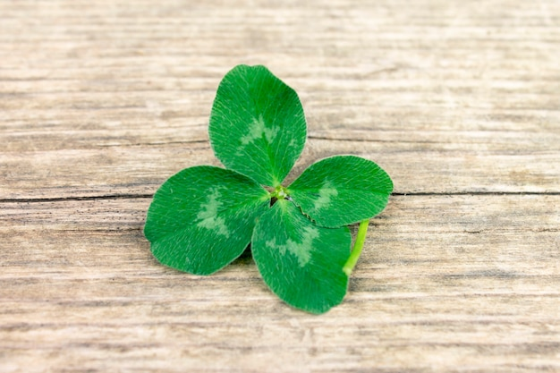 Trébol afortunado de cuatro hojas, trébol sobre fondo de madera retro viejo