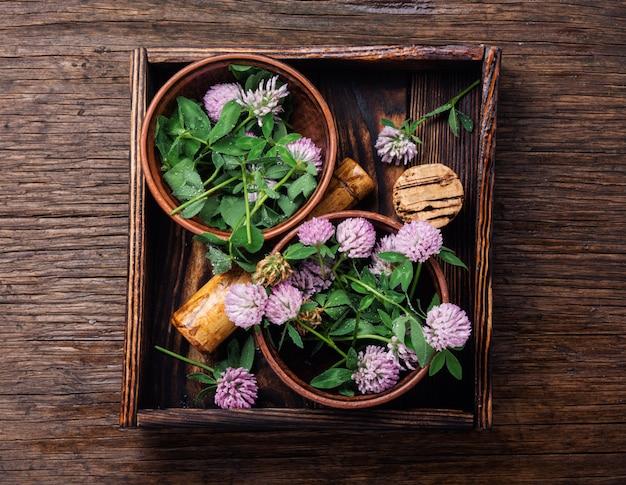 Trébol en medicina herbal