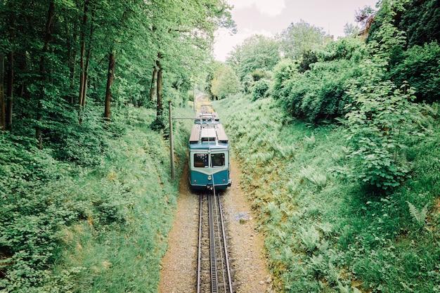 Tren en transporte ferroviario en bosque verde