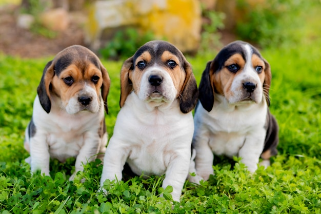 Tres cachorros juntos en el jardín.