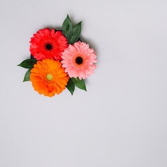 Tres capullos de flores con hojas en la mesa