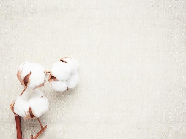 Tres flores de algodón sobre tela, concepto de tejido natural y suave, fabricación y sostenibilidad
