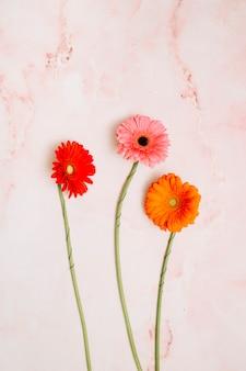 Tres flores de gerbera en mesa