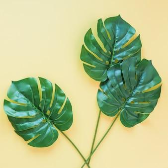 Tres grandes hojas de palma verde en la mesa