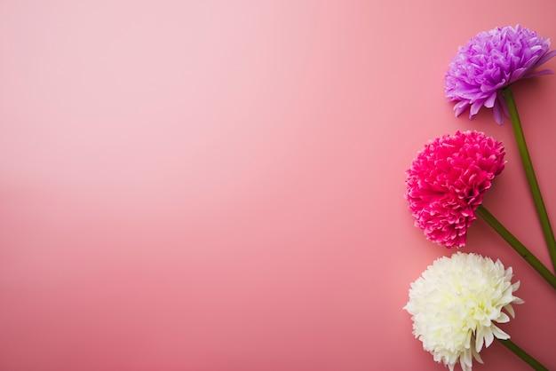 Tres hermosas flores de colores sobre fondo rosa