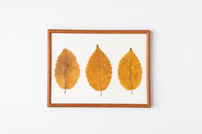 Tres hojas en marco