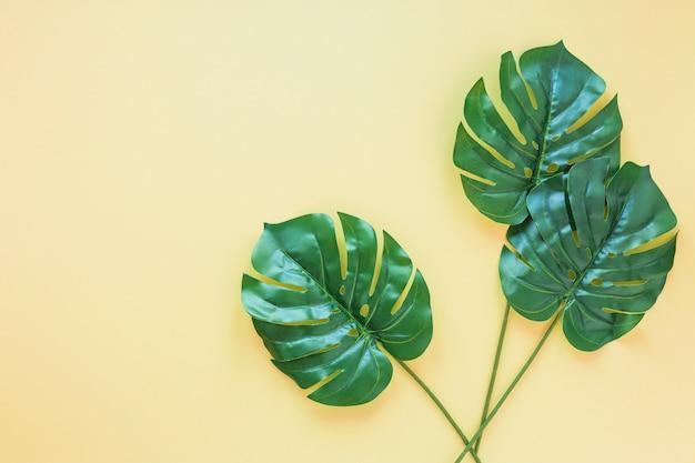 Tres hojas de palma verde en mesa amarilla