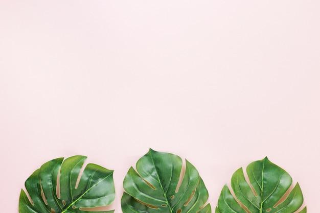 Tres hojas de palma verde en la mesa