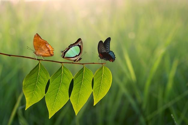 Tres mariposas en hoja verde y luz solar