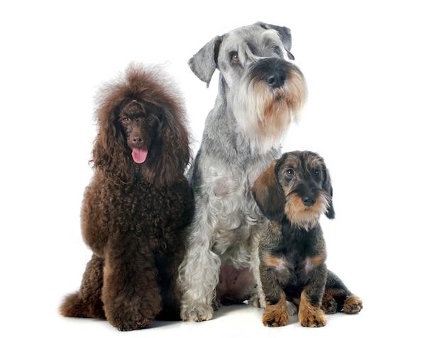 Tres perros
