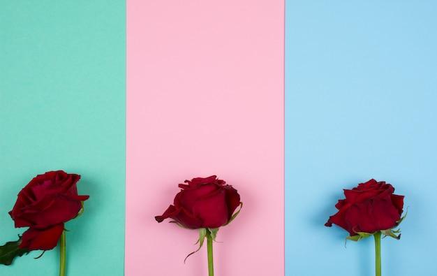 Tres rosas rojas sobre un fondo de papel multicolor