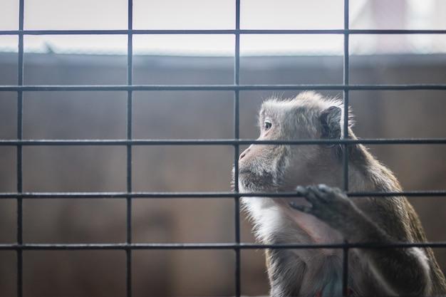 Tristemente mono en jaula de acero, prisionero escena emocional de animales primates.