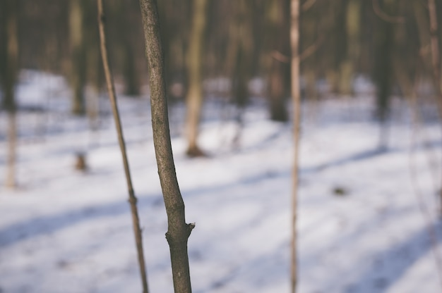 Tronco de un árbol joven en el bosque durante el invierno