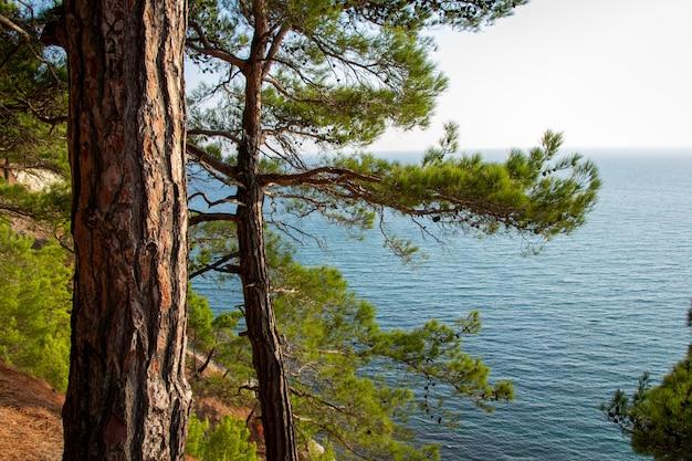 Tronco de árbol junto al mar. bosque de pinos.