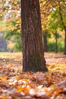 Tronco de árbol en medio de un parque de otoño en la tarde