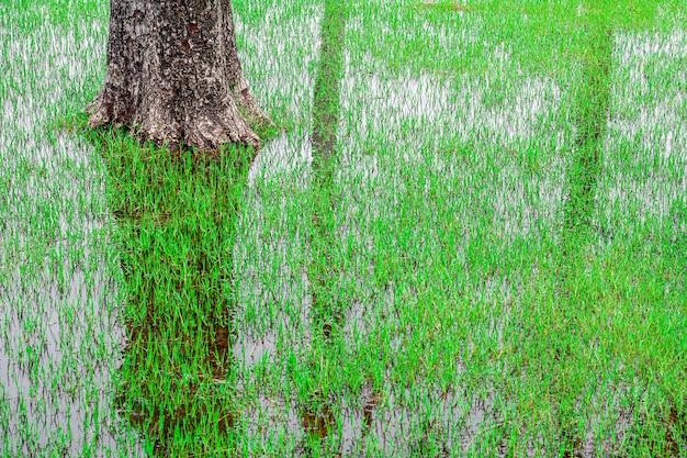 Un tronco de árbol y prados en el bosque de manglar.