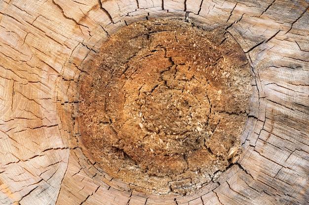 Tronco de árbol seccionado transversalmente, textura de madera del corte del primer, fondo