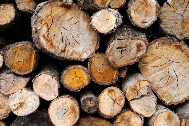 Tronco de madera cortado de fondo