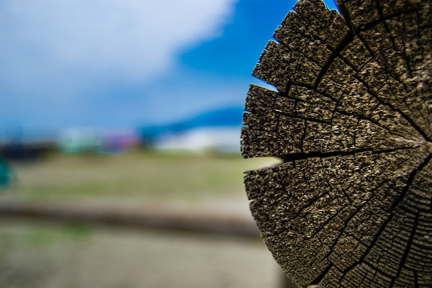Tronco de madera