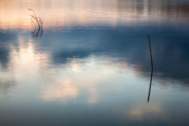 Troncos en agua con reflejos del cielo