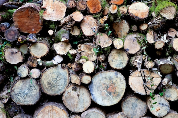 Troncos de madera apilados - combustible para fuego -