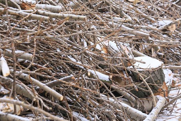 Troncos de madera aserrada y pequeñas ramitas en la nieve.