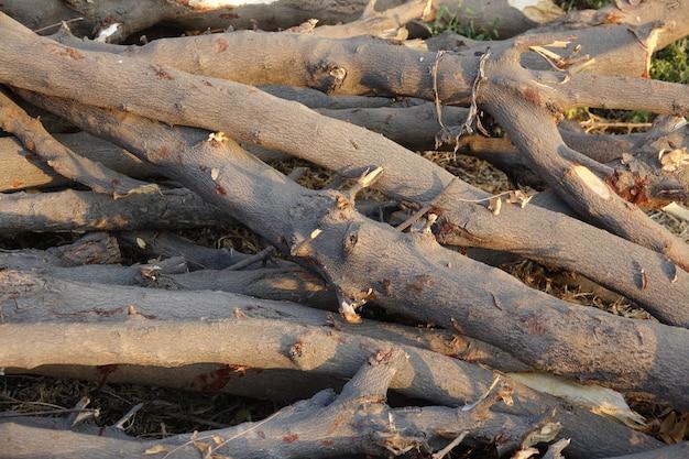 Troncos de madera recién cortados en el suelo