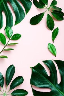 Tropical deja monstera sobre fondo rosa. hoja de planta monstera verde sobre fondo rosa con espacio de copia. vista superior.