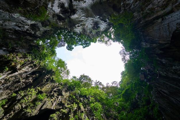Trozo de cielo entre copas de árboles
