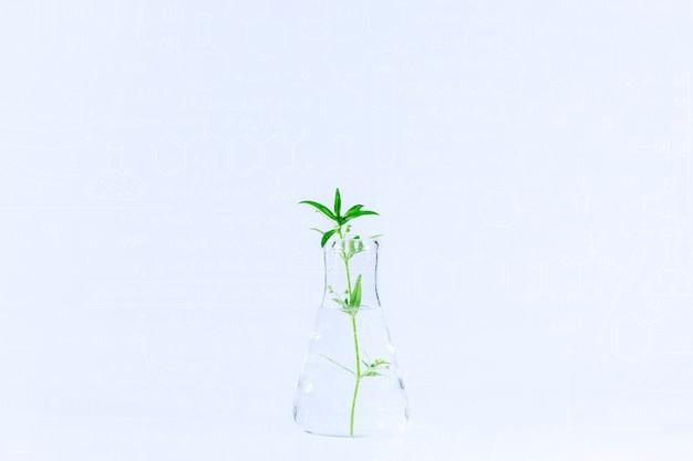 Tubos de ensayo y otro material de vidrio de laboratorio con diferentes plantas sobre fondo blanco.