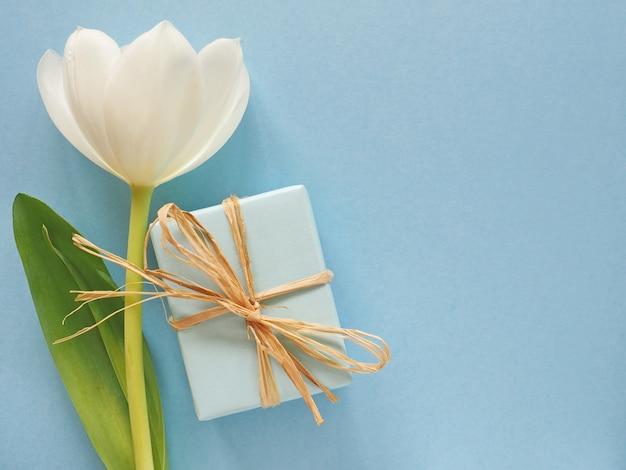 Tulipán blanco con caja de regalo sobre superficie azul