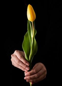 Tulipán de primavera de alto ángulo