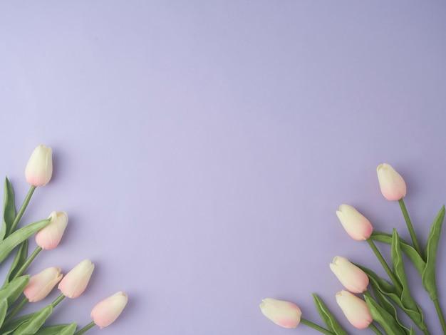 El tulipán de la primavera florece en la opinión superior del fondo púrpura en estilo plano de la endecha.